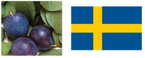 Plommon - die Gewinnerin aus Schweden!